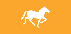 Inglés & Equitación Residencia